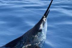 Costa Rica Marlin U February 2019